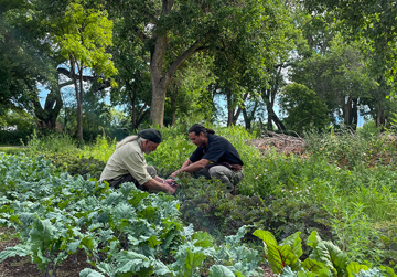 Chef and farmer harvesting