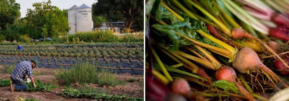 Los Poblanos Organic Farm