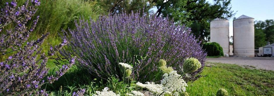 Organic Lavender & Farm Los Poblanos