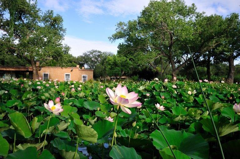 Los Poblanos Lotus Pond by Tim Keller