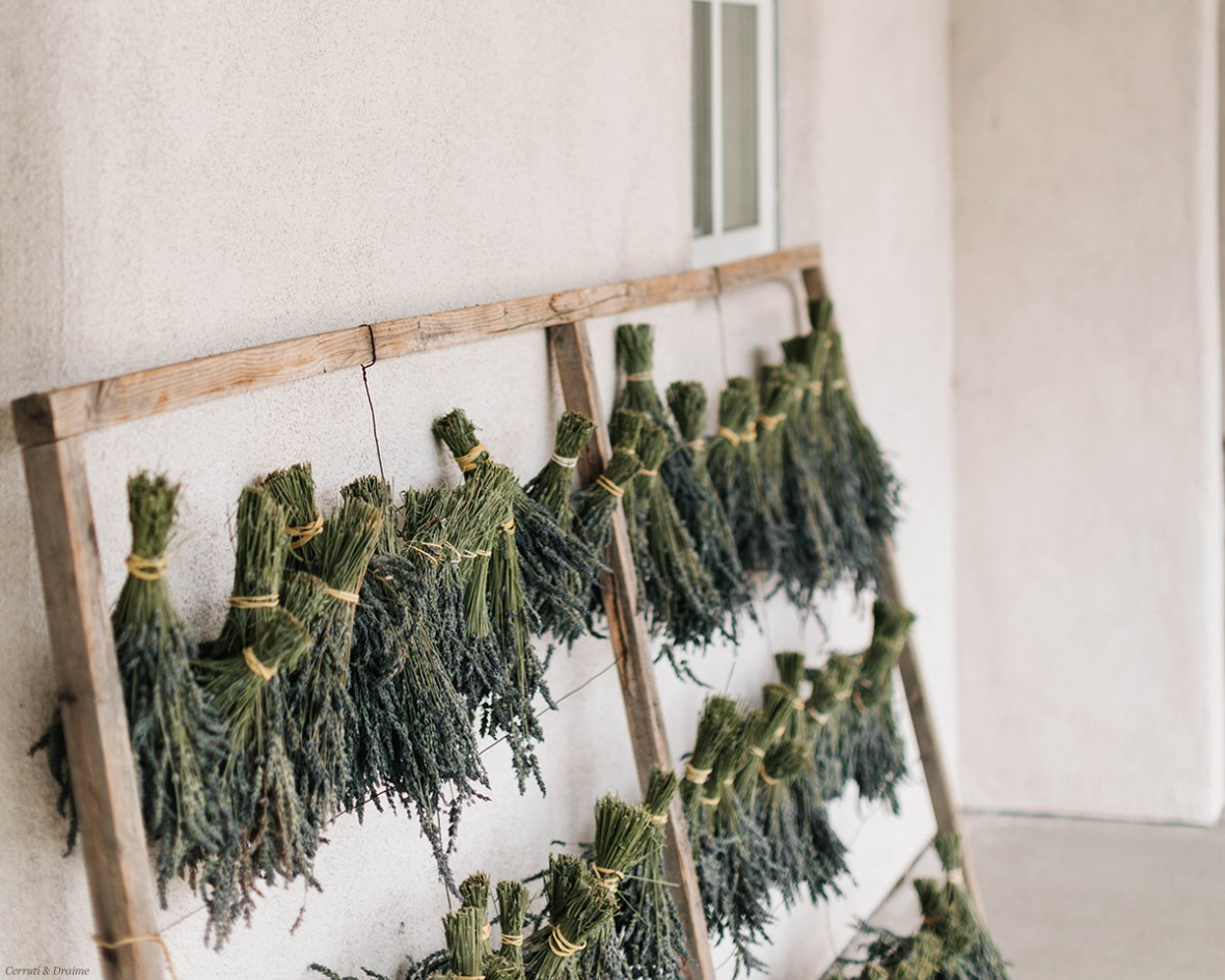 lavender being hung to dry