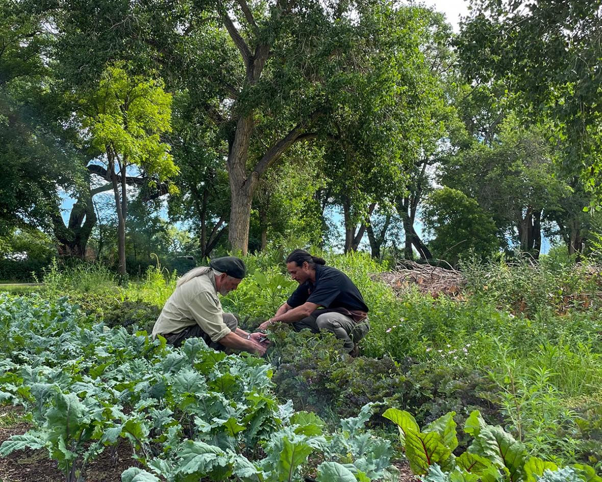 farm gardensyurt-