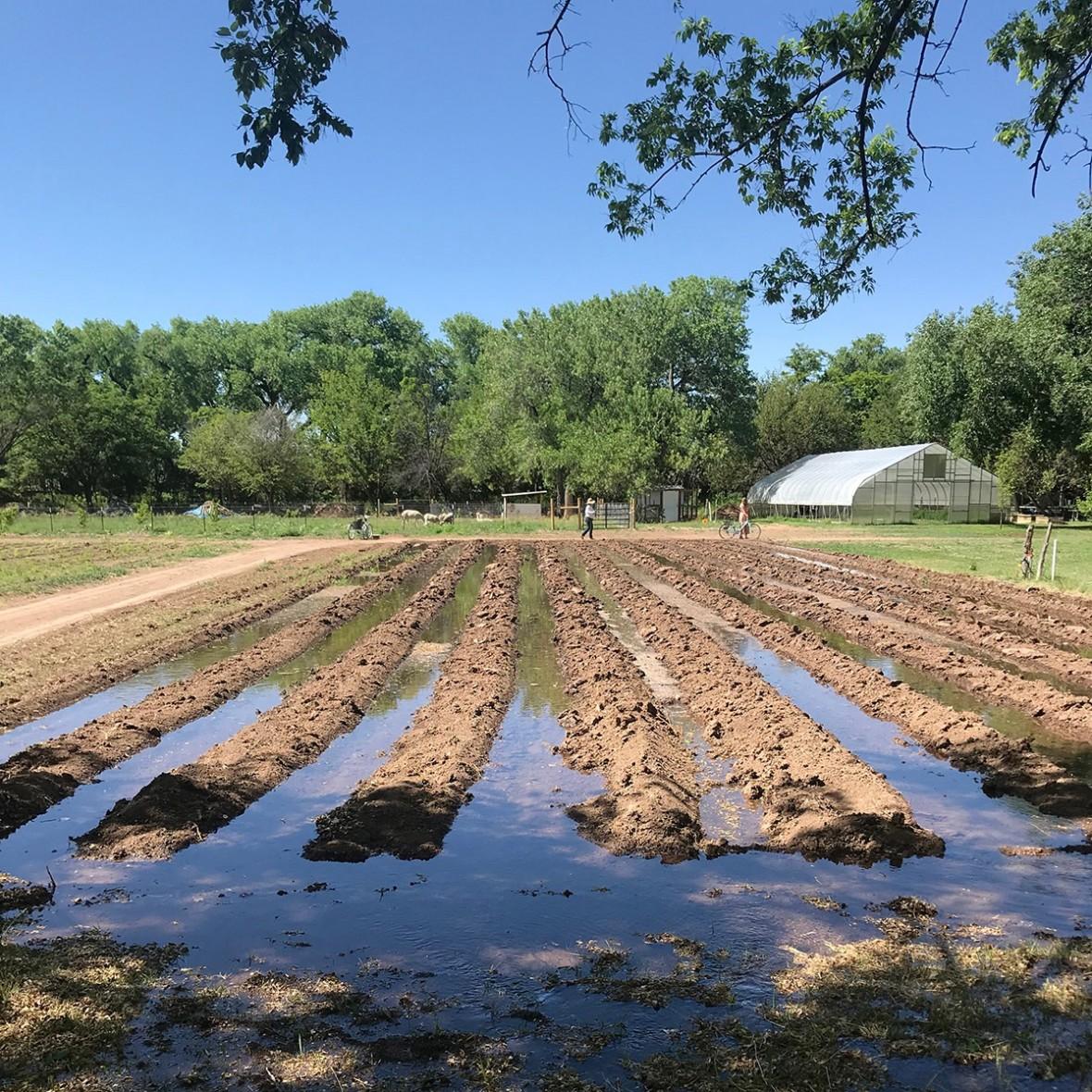 ancient field irrigation
