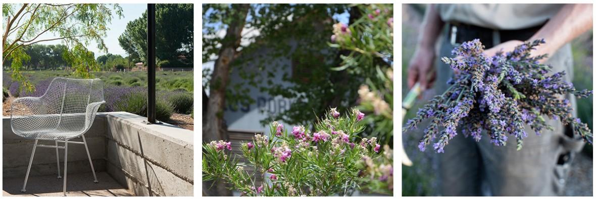 3 photo set of lavender