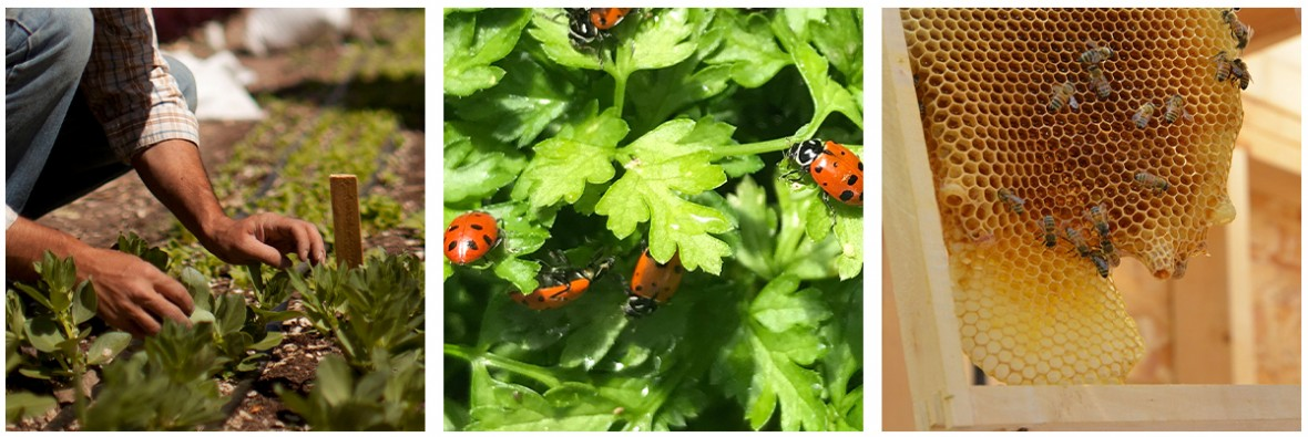 photo set of gardening, lady bugs and bee hive