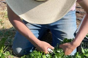 Farm Journal: Herbs