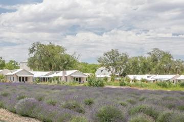 Farm Journal: Lavender Season