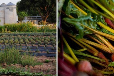 Kitchen Gardens & Artisan Farming